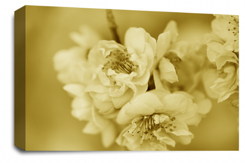 Floral Flower Wall Art Picture Sepia White Spring Blossom Print